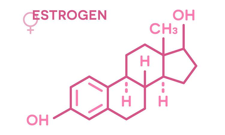 Hoocmon estrogen được sinh ra ở đâu?